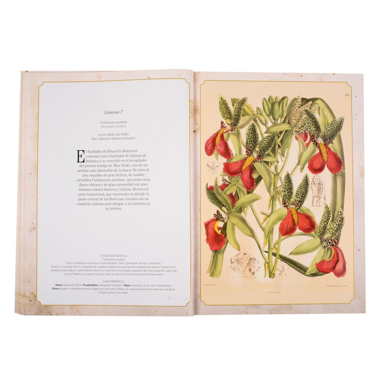 Ilustraciones de Maravillas de la botánica
